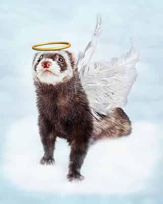 Pet Ferret Angel In Clouds Poster