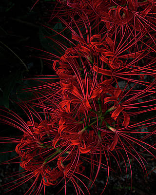 Petals Of Fireworks Poster