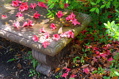 Petals On A Bench Poster