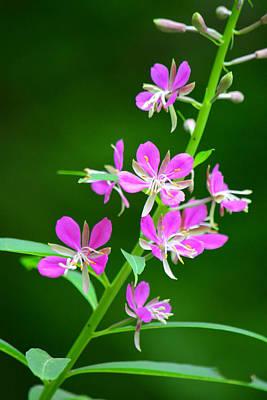 Petites Fleurs Violettes Poster