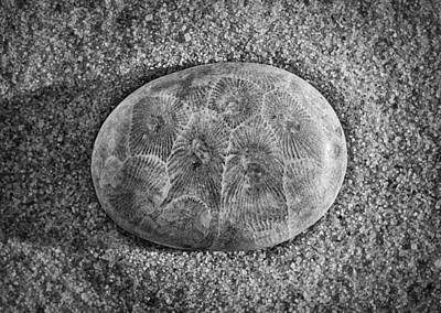 Petoskey Stone In Black And White Poster by Matt Hammerstein