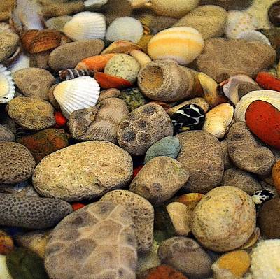 Petoskey Stones With Shells Ll Poster by Michelle Calkins
