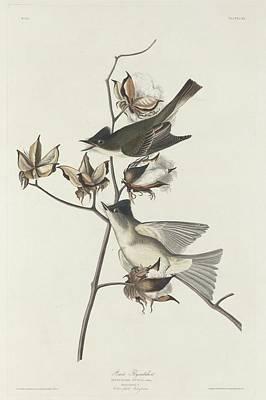 Pewit Flycatcher Poster