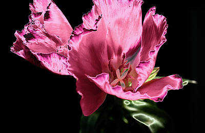 Poster featuring the photograph Pflower Pfunn by Sheryl Thomas