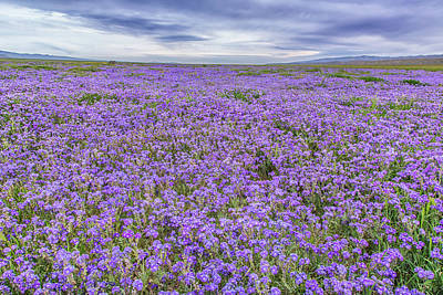 Poster featuring the photograph Phacelia Field And Clouds by Marc Crumpler