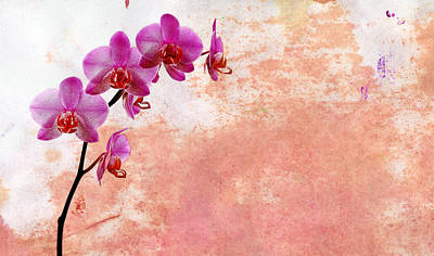 Phalaenopsis Orchid Pink Poster by Mark Rogan