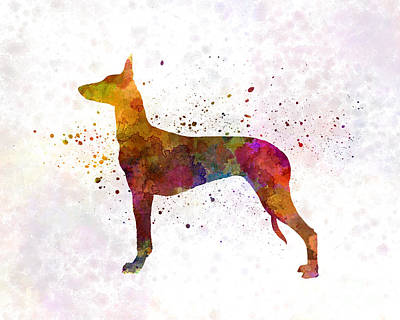 Pharaoh Hound In Watercolor Poster