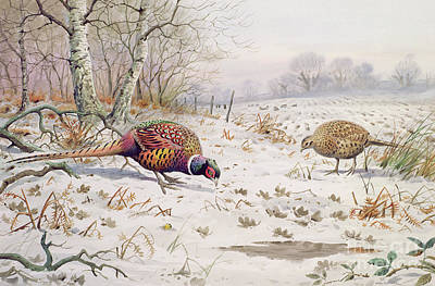 Pheasant And Partridge Eating  Poster