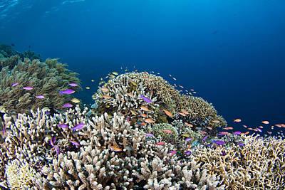 Phillipines Reef Poster