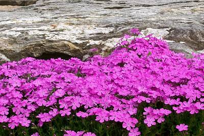Poster featuring the digital art Phlox by Barbara S Nickerson