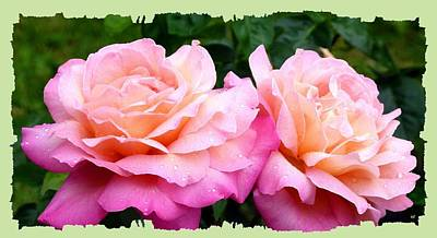 Poster featuring the photograph Photogenic Peace Roses by Will Borden