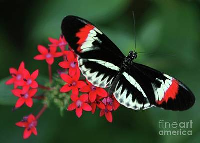 Piano Key Butterfly Poster