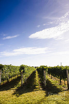 Picturesque Tasmania Vineyard Poster by Jorgo Photography - Wall Art Gallery