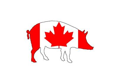 Pig Canada Poster by Mordax Furittus
