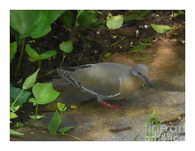 Poster featuring the photograph Pigeon by Felipe Adan Lerma