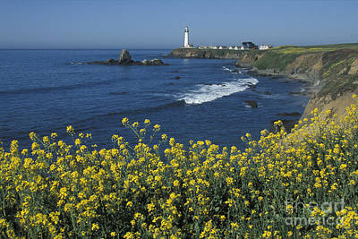 Pigeon Point Panorama Poster by Stan and Anne Foster