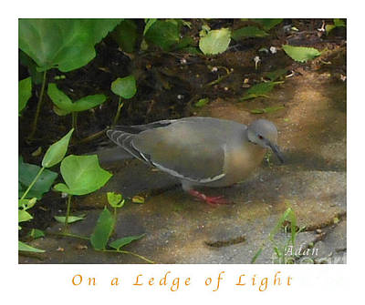Poster featuring the photograph Pigeon Poster by Felipe Adan Lerma