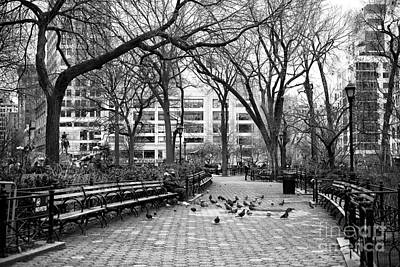 Pigeons In Union Square Park Poster