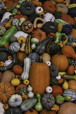 Pile Of Squash Poster by Garry Gay
