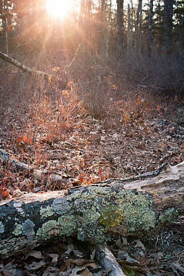 Pine Barrens Poster by Sinitar Photo