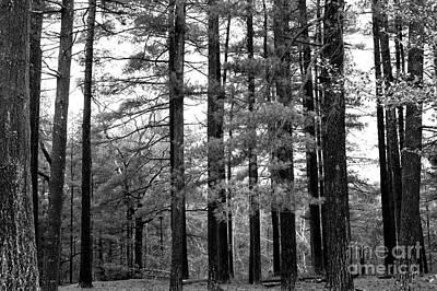 Pine Barrens Poster by John Rizzuto
