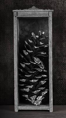 Pine Cone In A Box Still Life Poster by Tom Mc Nemar