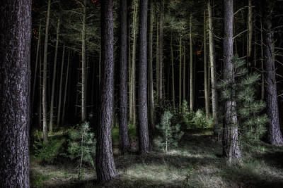 Pine Tree Forest At Night Poster