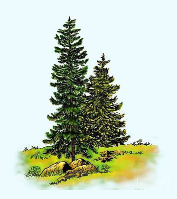 Pine Tree Nature Watercolor Ink Image 2b        Poster