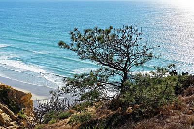 Pine Tree On Coast Poster