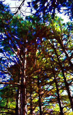 Pine Trees In Abstract 1 Poster