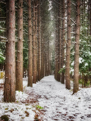 Pine Trees - Winter At Retzer Nature Center  Poster by Jennifer Rondinelli Reilly - Fine Art Photography