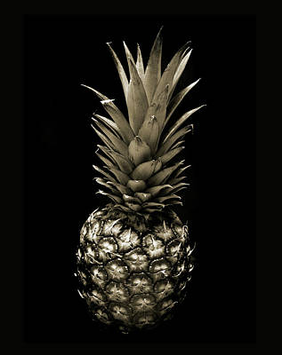 Pineapple In Sepia. Poster by Terence Davis