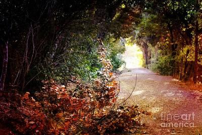 Piner Creek Path Poster