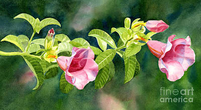 Pink Allamanda Blossoms With Background Poster