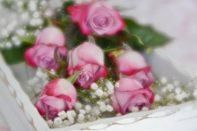 Poster featuring the photograph Pink And White Roses In White Box 2 by Diane Alexander