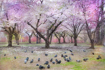 Poster featuring the photograph Pink And White Spring Blossoms - Boston Common by Joann Vitali