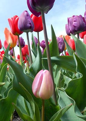 Pink Baby In Tulip Garden Poster