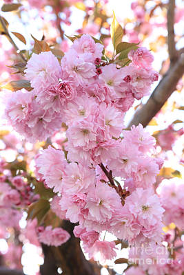 Pink Blossoms Beauty Poster by Carol Groenen