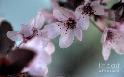 Poster featuring the photograph Pink Blossoms by Jim and Emily Bush