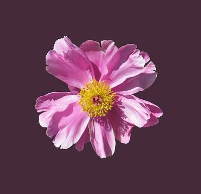Pink Burst Poster