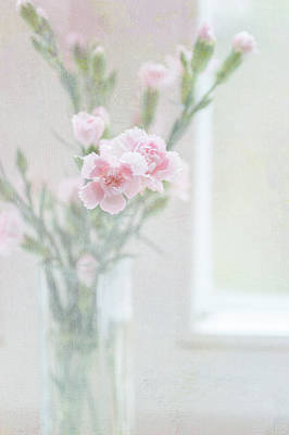 Pink Carnation At The Window Poster by Jenny Rainbow