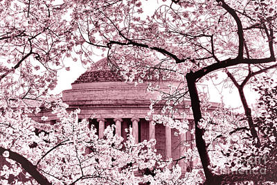 Pink Cherry Trees At The Jefferson Memorial Poster by Olivier Le Queinec