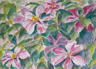 Pink Clematis Poster
