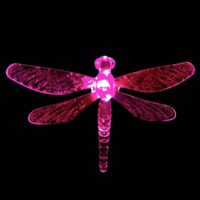 Pink Dragonfly Poster
