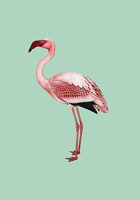Pink Flamingo Isolated Poster