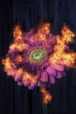 Pink Flower In Flames Poster