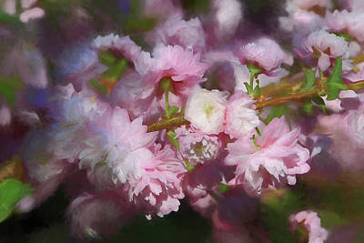 Poster featuring the photograph Pink Flowering Almond by Donna Kennedy