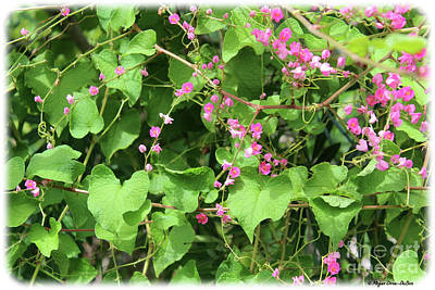 Poster featuring the photograph Pink Flowering Vine1 by Megan Dirsa-DuBois