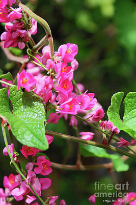 Poster featuring the photograph Pink Flowering Vine3 by Megan Dirsa-DuBois