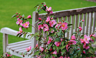 Pink Flowers By The Bench Poster by Cynthia Guinn